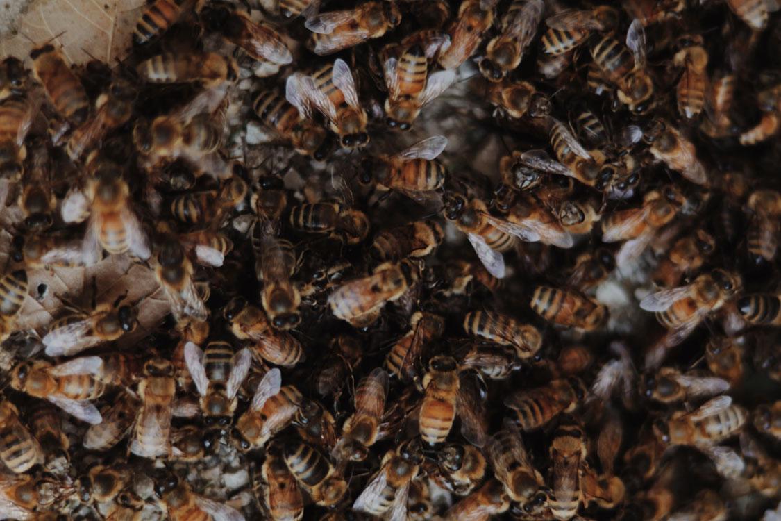 save the bees daniela buvat