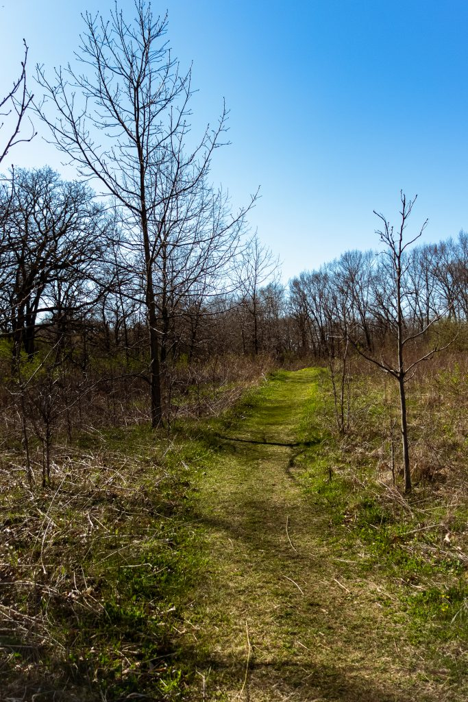 A grassy hiking path through a wooded section of the Ice Age Trail.