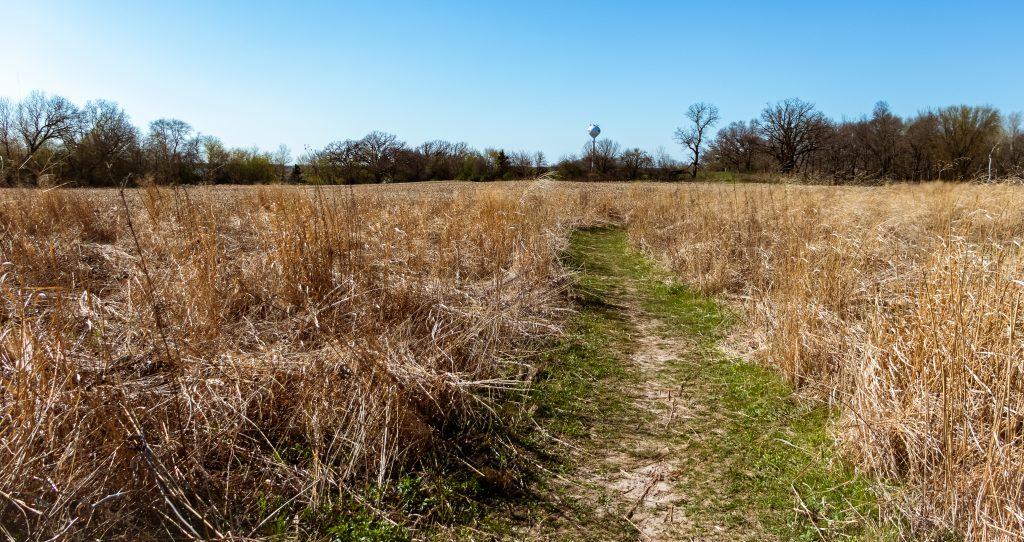 A grassy hiking path through a field.